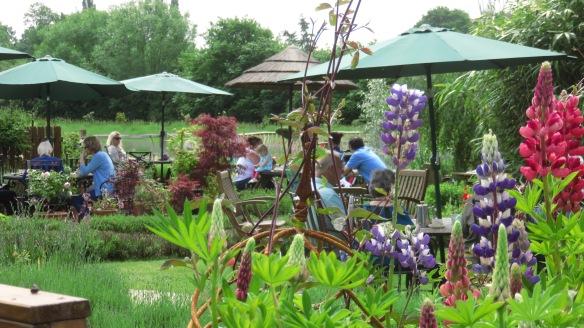Lavender Farm 4