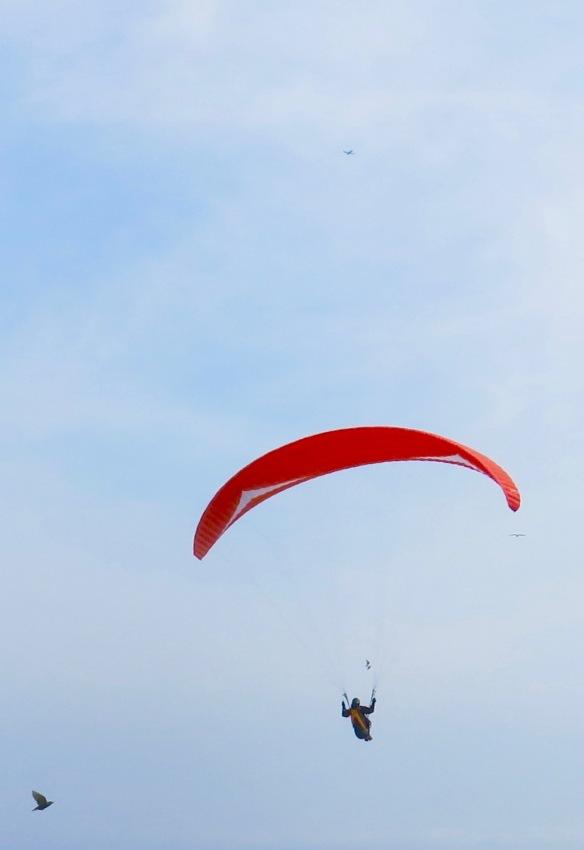 Paraglider, birds, plane