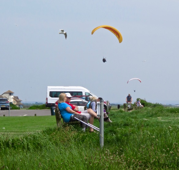 Paragliders and gulls