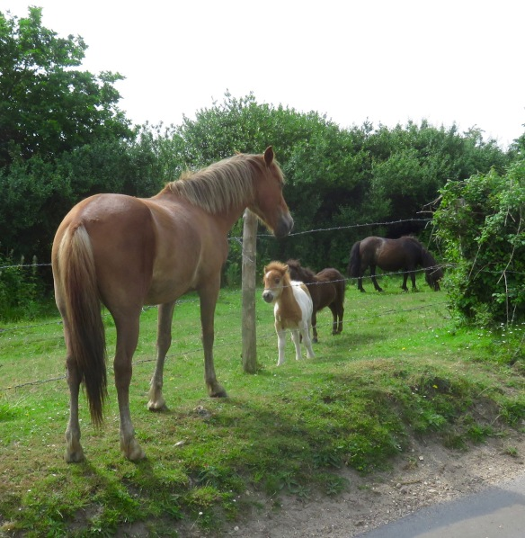 Ponies and foals 1