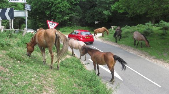 Ponies on road 3