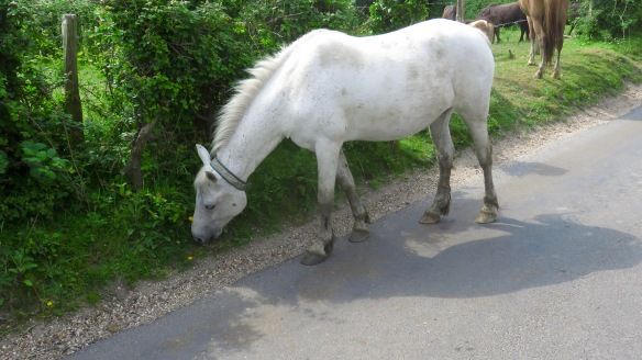 Pony on road