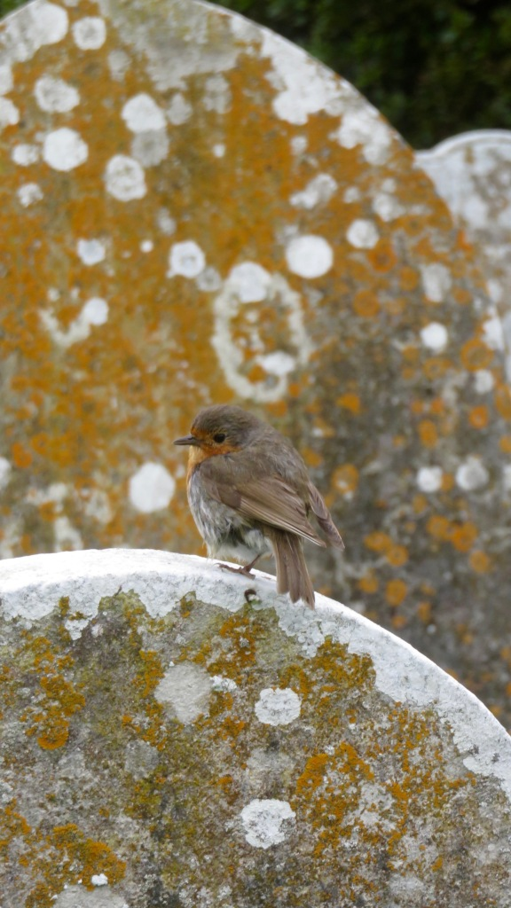 Robin on gravestone 2