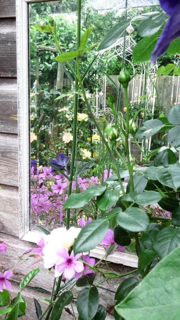 Rose garden reflection