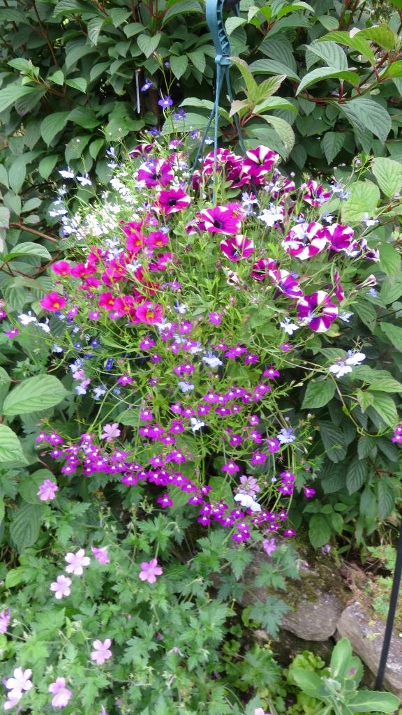 Petunias, mimuluses, lobelias, geraniums