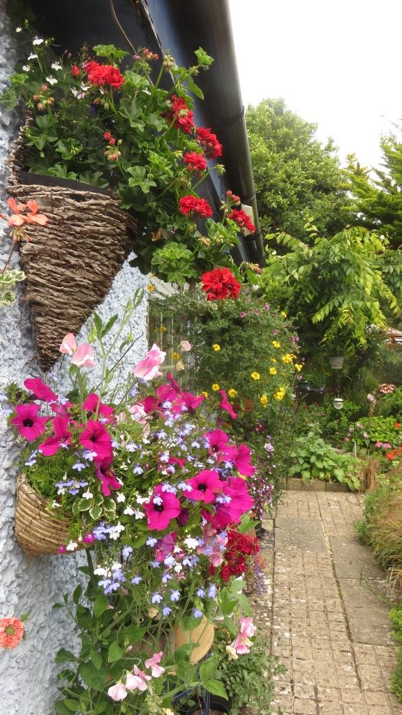 Petunias, sweet peas, lobelia, bidens, geraniums