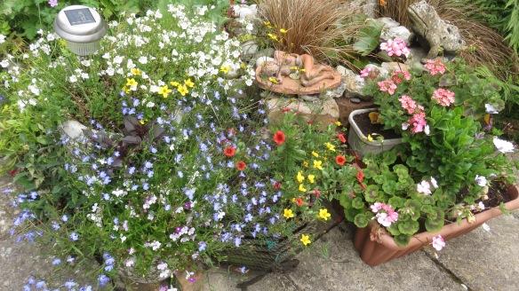 Lobelia, bidens, mimuluses, geraniums
