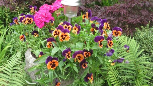 Pansies and geraniums