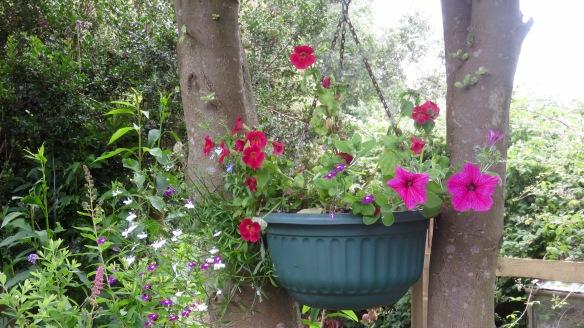 Petunias, mimumuluses and lobelia
