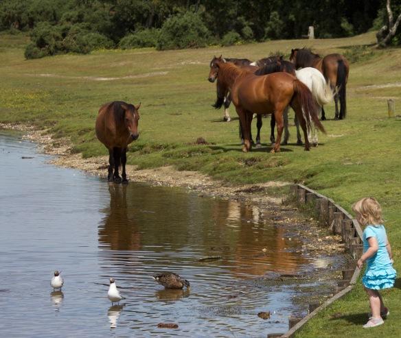 Child, duck, gulls, ponies