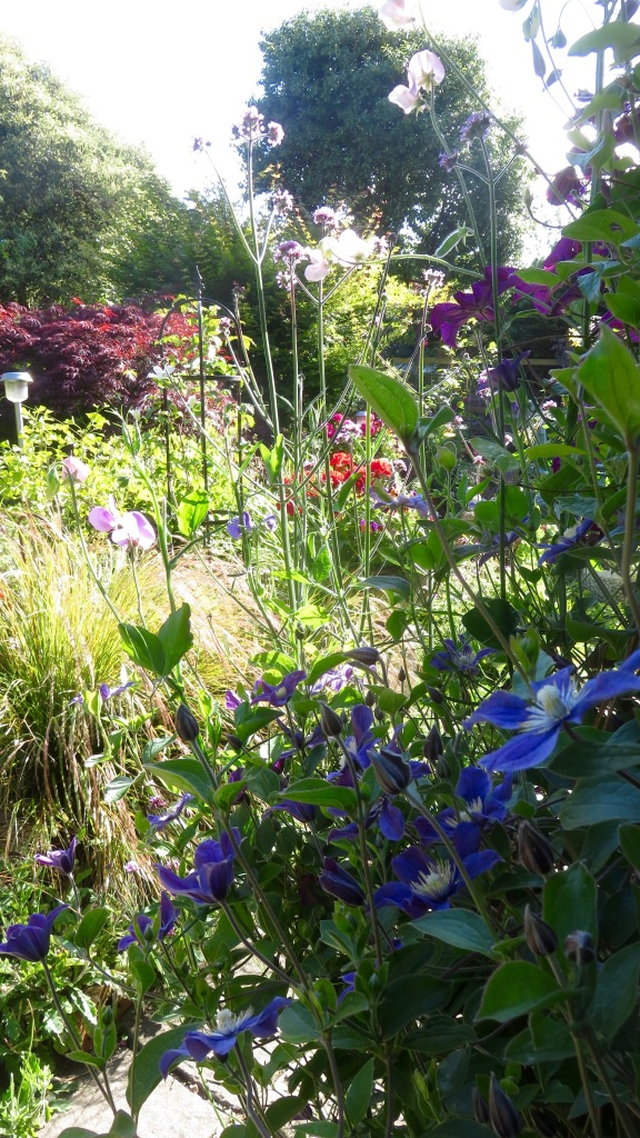 Clematises and sweet peas