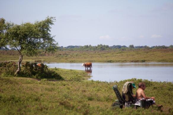 Cow in Hatchet Pond