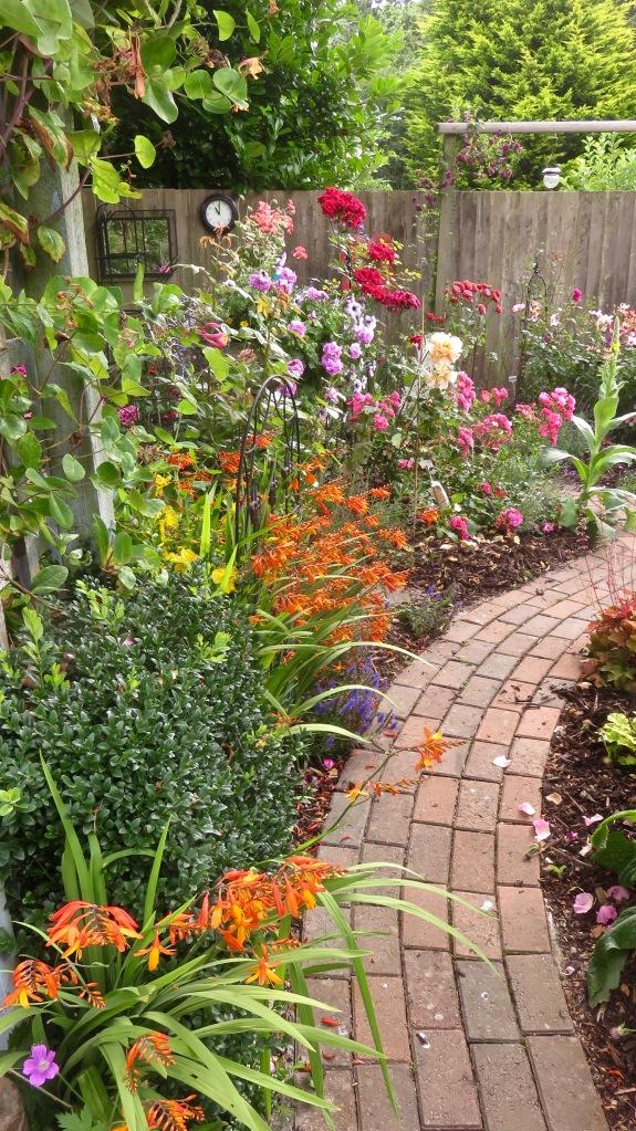 Crocosmia in Rose Garden