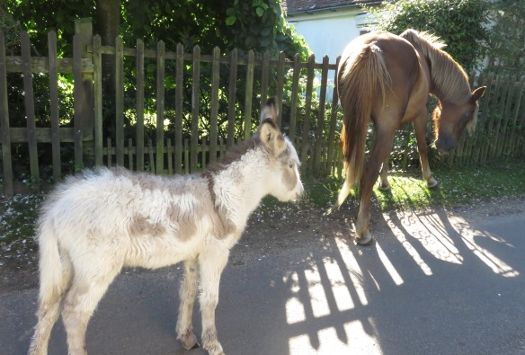 Donkey and pony
