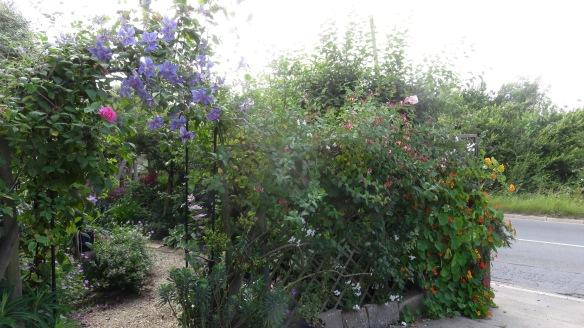 Front garden trellis