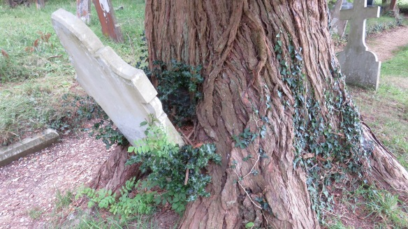 Gravestone in tree