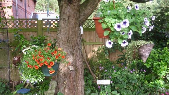 Petunias, mimuluses, lobelia, geraniums, owl