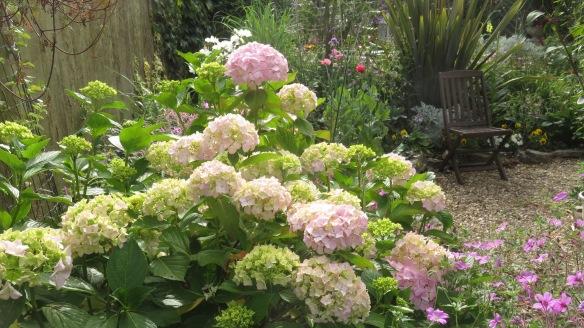 Hydrangea, geraniums, poppies, pansies, verbena bonarensis