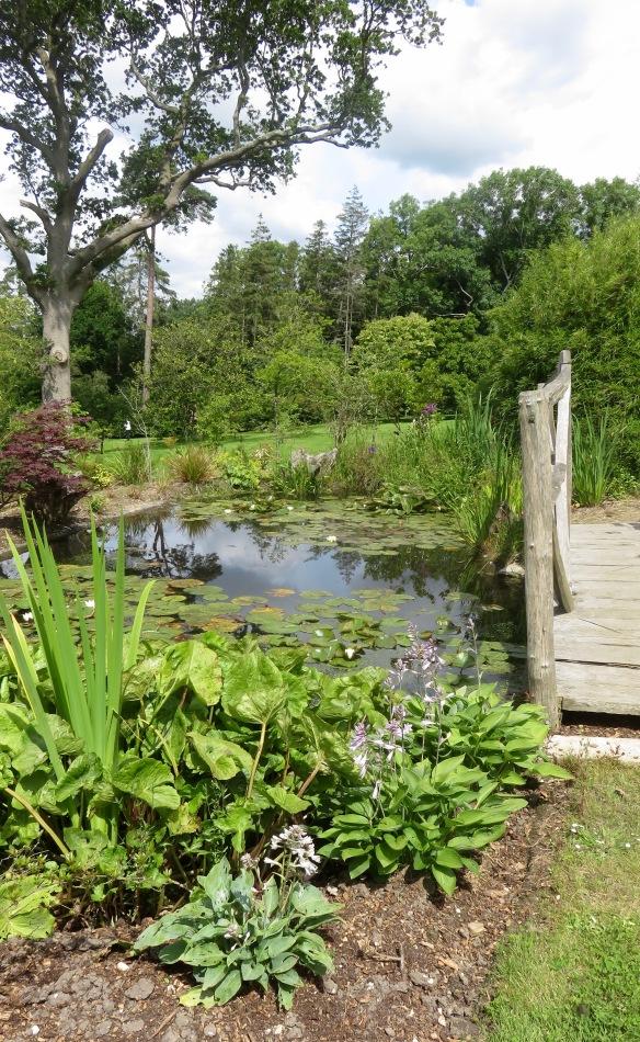 Lily pond and bridge