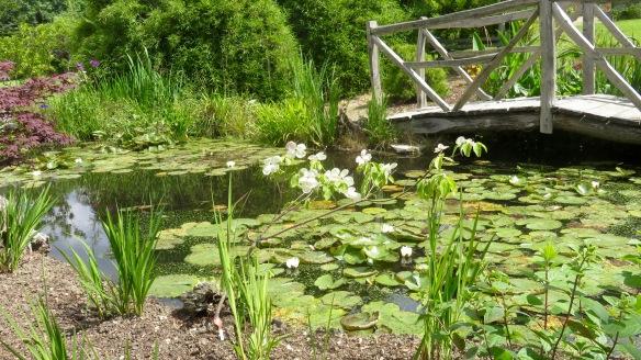 Lily pond and bridge 2