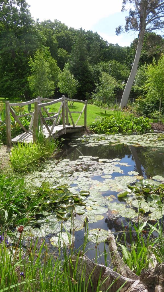 Lily pond and bridge 3
