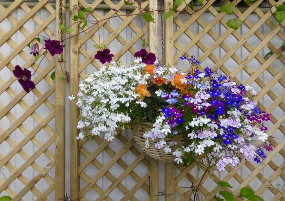 Lobelias, begonias, clematis