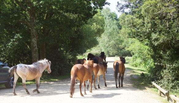 Ponies 1