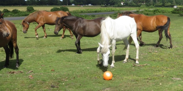 Ponies and ball