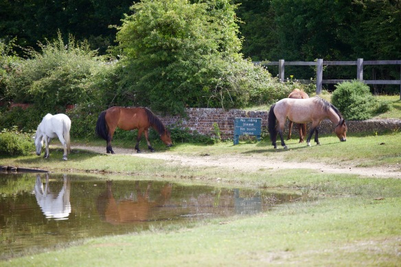 Ponies reflected