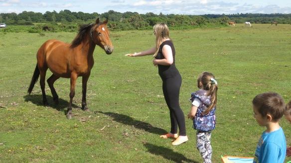 Pony and tourists
