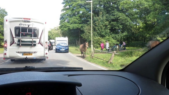 Pony and traffic