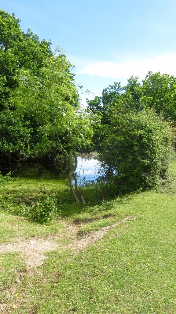 Pond reflection 1