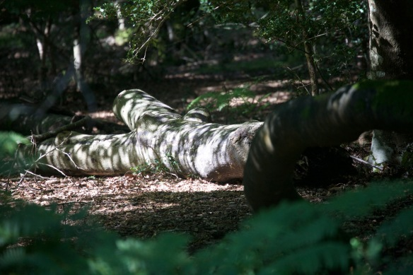 Dappled trunk