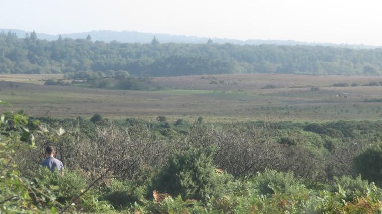 Hincheslea Moor 1
