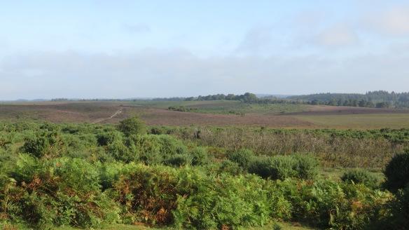 Hincheslea Moor 2