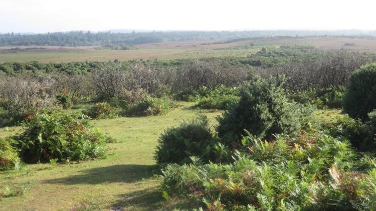 Hincheslea Moor 3