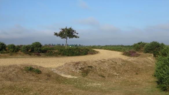 Hincheslea Moor 4