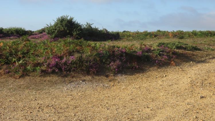 Hincheslea Moor 5