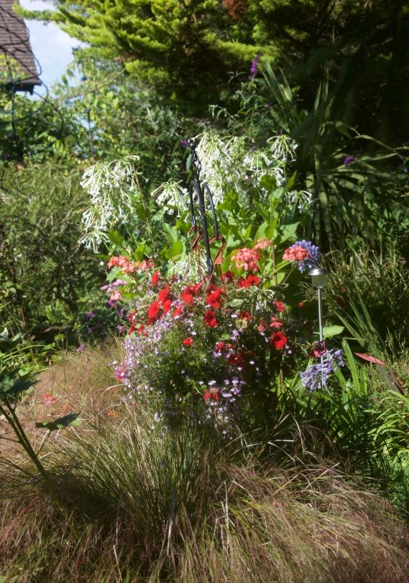 Ornamental grass, petunias, lobelias, nicotiana sylvestris