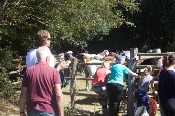Pony round-up 1
