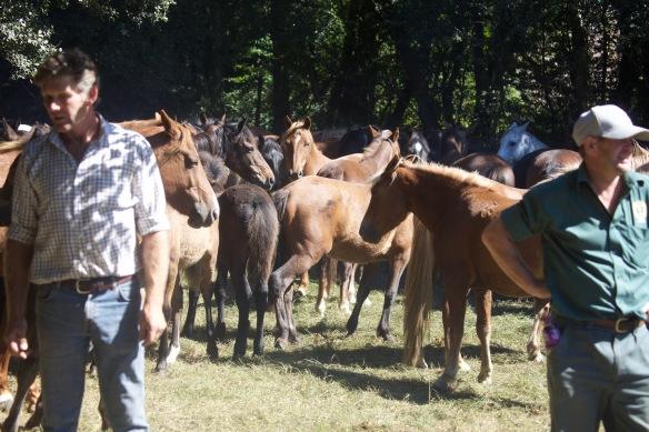 Pony Round-up 12