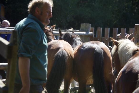 Pony Round-up 13