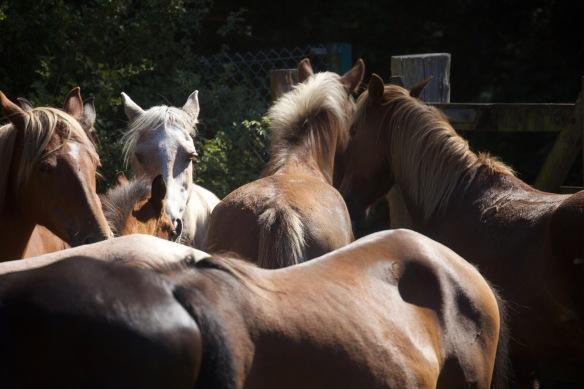Pony Round-up 14
