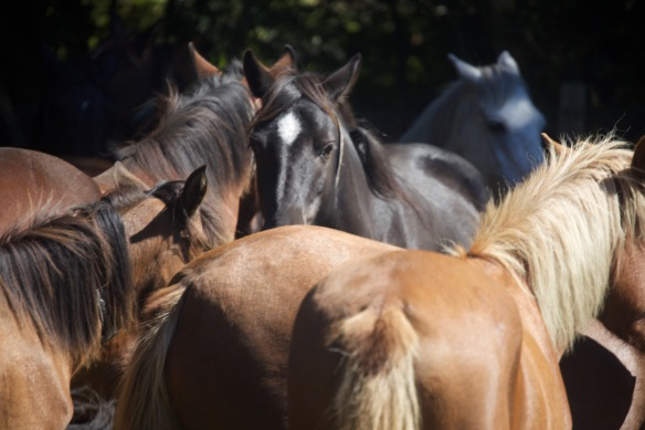 Pony Round-up 15