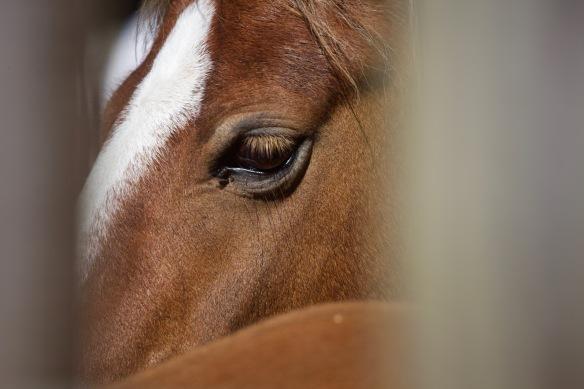 Pony Round-up 17