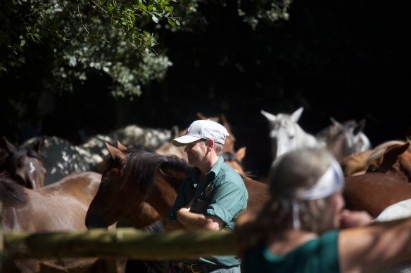 Pony Round-up 2