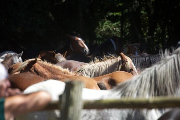 Pony Round-up 3
