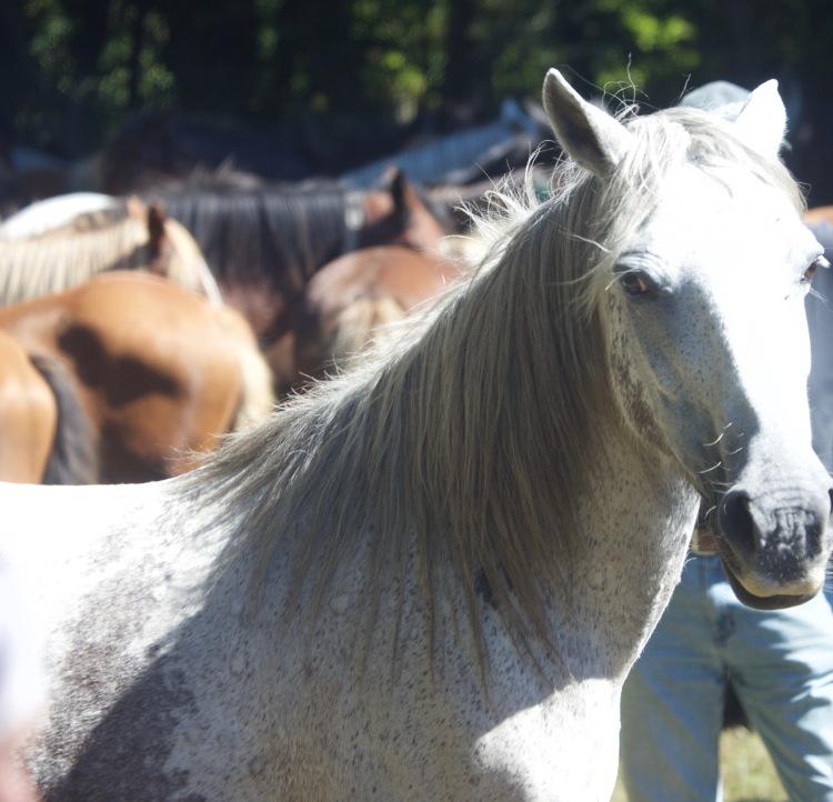 Pony Round-up 5