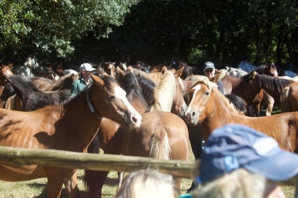 Pony Round-up 8