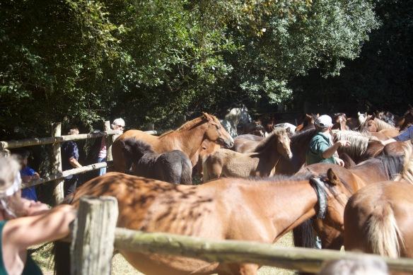 Pony Round-up 9
